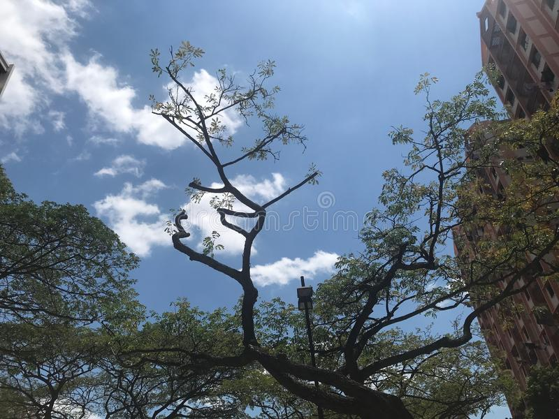 Blue cloudy day with Tree silhouette royalty free stock image