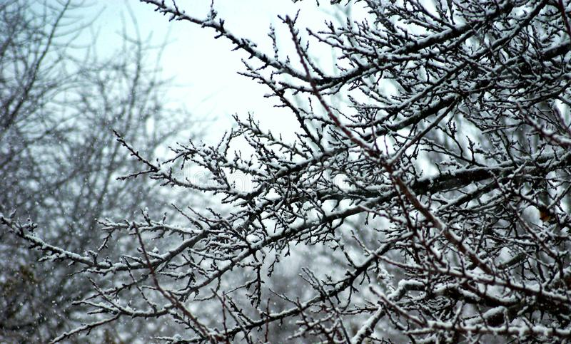 Snow-covered tree branches beautiful lace contrasted in the snowy rest. stock image