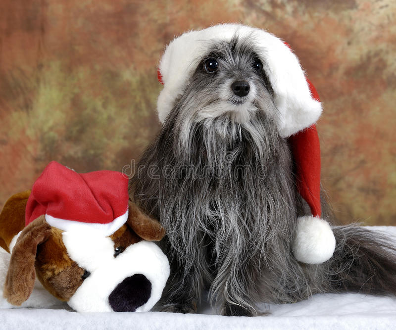 Goofy Christmas dog royalty free stock photography
