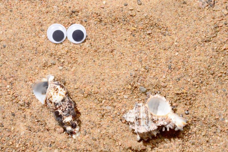Googly ögon som ligger på havssanden som ser havsskalet, sandbakgrund , närbild för två skal royaltyfri fotografi