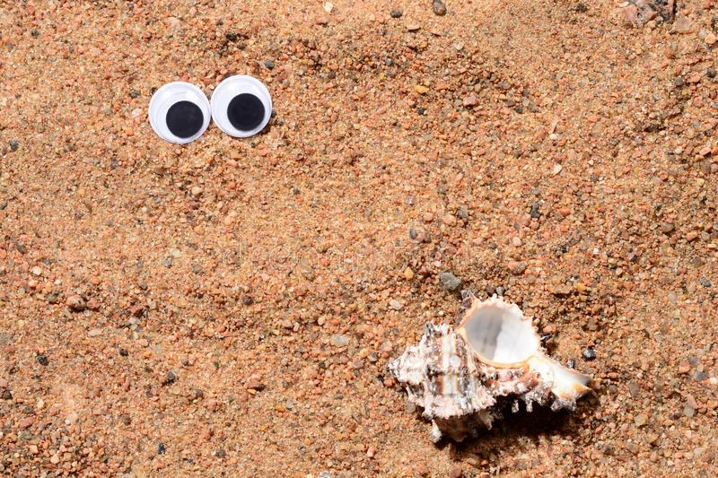 Googly eyes lying on the sea sand looking at sea shell. Sand background.,close-up. Googly eyes lying on the sea sand looking at sea shell Sand background. Close royalty free stock image
