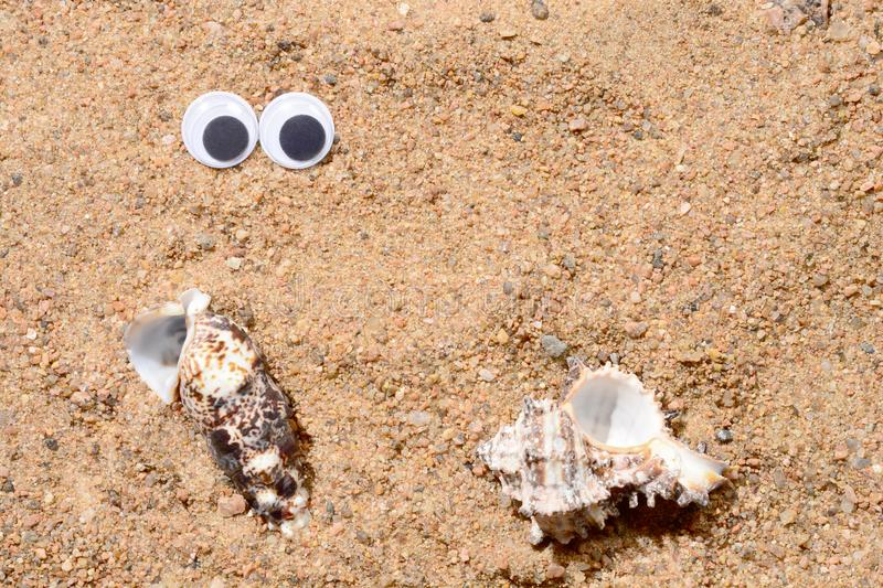 Googly eyes lying on the sea sand looking at sea shell, sand background., two shells close-up. Googly eyes lying on the sea sand looking at sea shell, sand royalty free stock photography