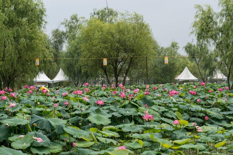 Download Goongnamji imagen de archivo. Imagen de flor, bosque - 42437949