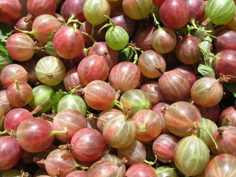 Goosberry imagens de stock