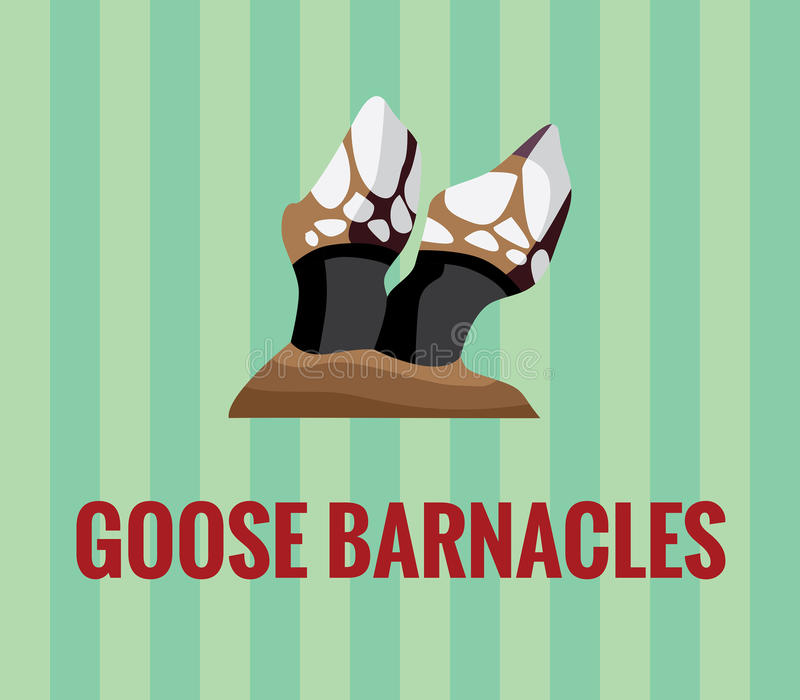 Goose barnacles. Drawing of a galician seafood speciality goose barnacles. Vector drawing. Fully resizable vector illustration