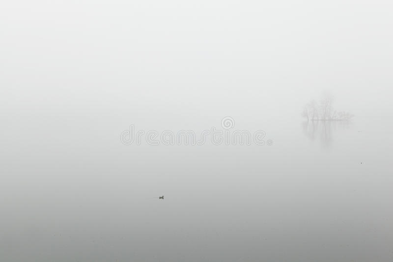 Download Goose in the fog stock photo. Image of smog, water, weather - 24211956