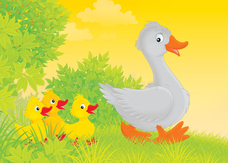 Download Goose And Goslings Stock Photos - Image: 28155573