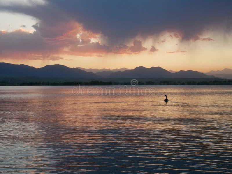 Goose på Stanley Lake vid sunset arkivbilder