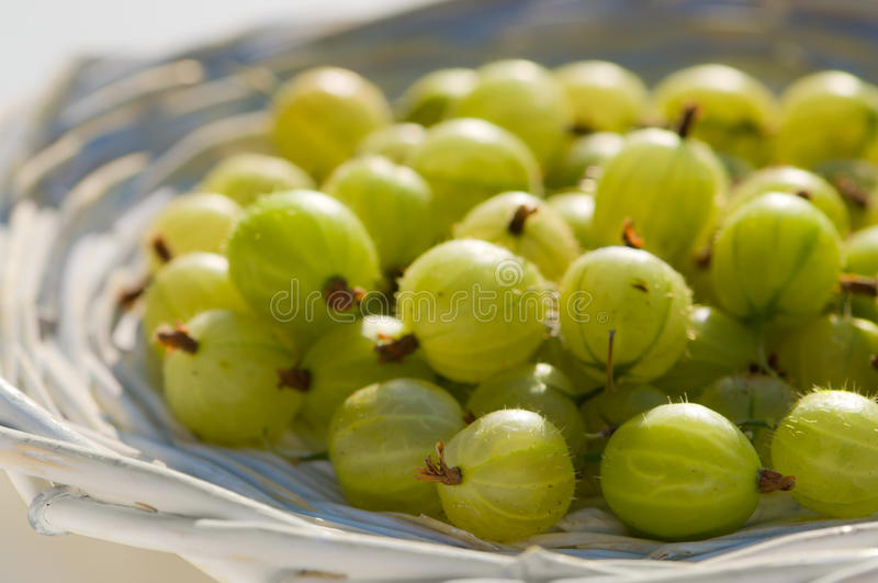 Download Gooseberries stock image. Image of bunch, whole, fresh - 14942331