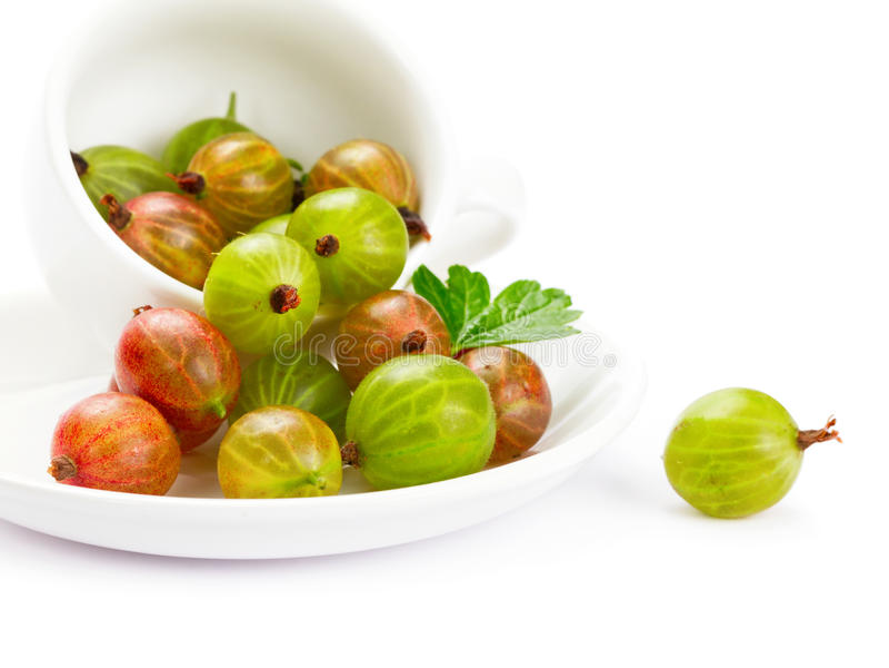 Download Gooseberries stock photo. Image of ripe, gooseberry, lustiness - 20064246