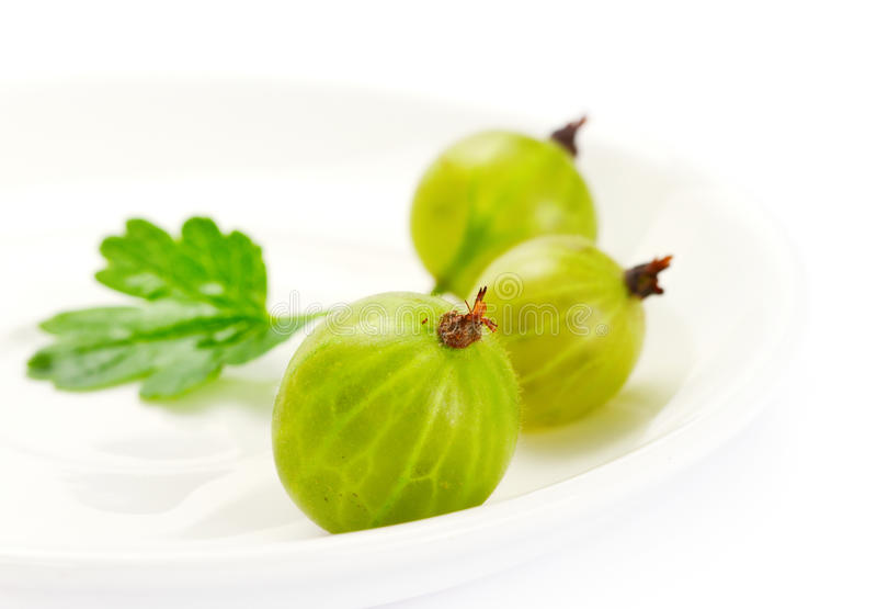 Download Gooseberries stock photo. Image of organic, freshness - 20064260