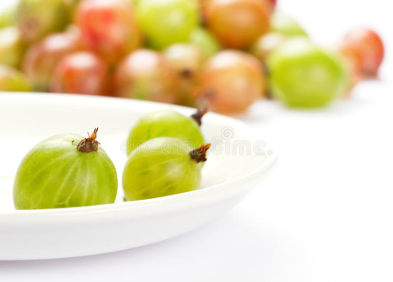 Download Gooseberries stock photo. Image of food, fresh, freshness - 20064282