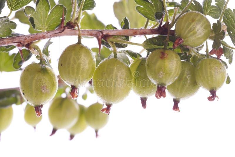 Gooseberries over white