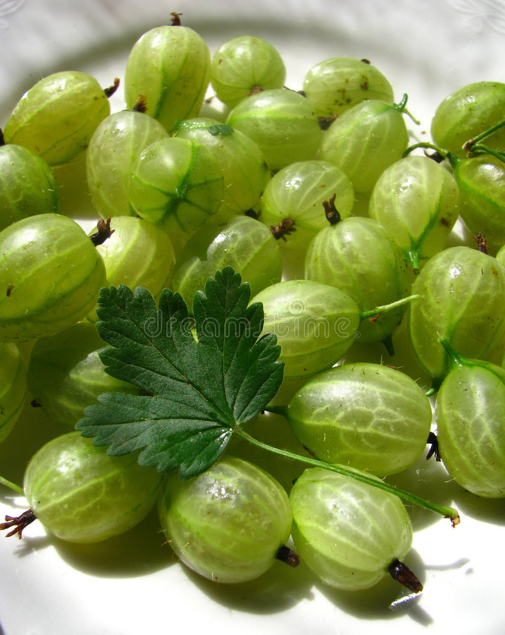 Gooseberries on a plate. With a gooseberry leaf royalty free stock images