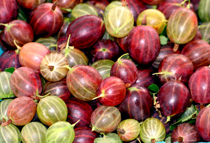 Gooseberries up close royalty free stock image