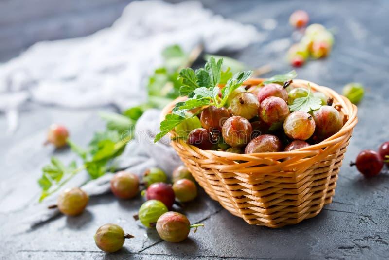 gooseberry immagini stock
