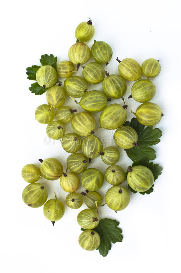 Download Gooseberry stock image. Image of food, gourmet, group - 13520989