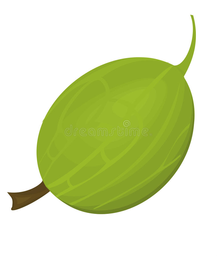 Download Gooseberry stock vector. Image of drink, vector, isolated - 20014473