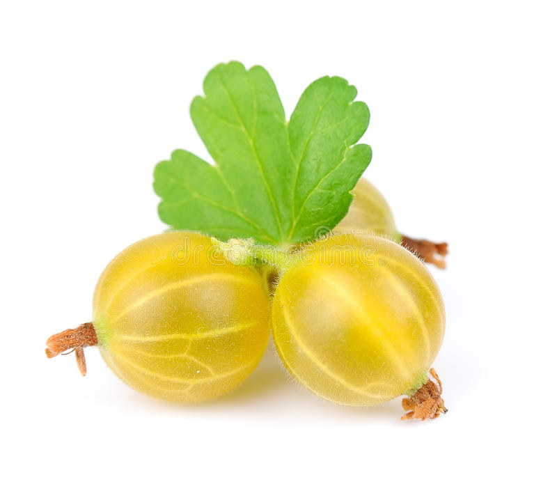 Download Gooseberry stock photo. Image of sour, sweet, white, gooseberry - 25293356