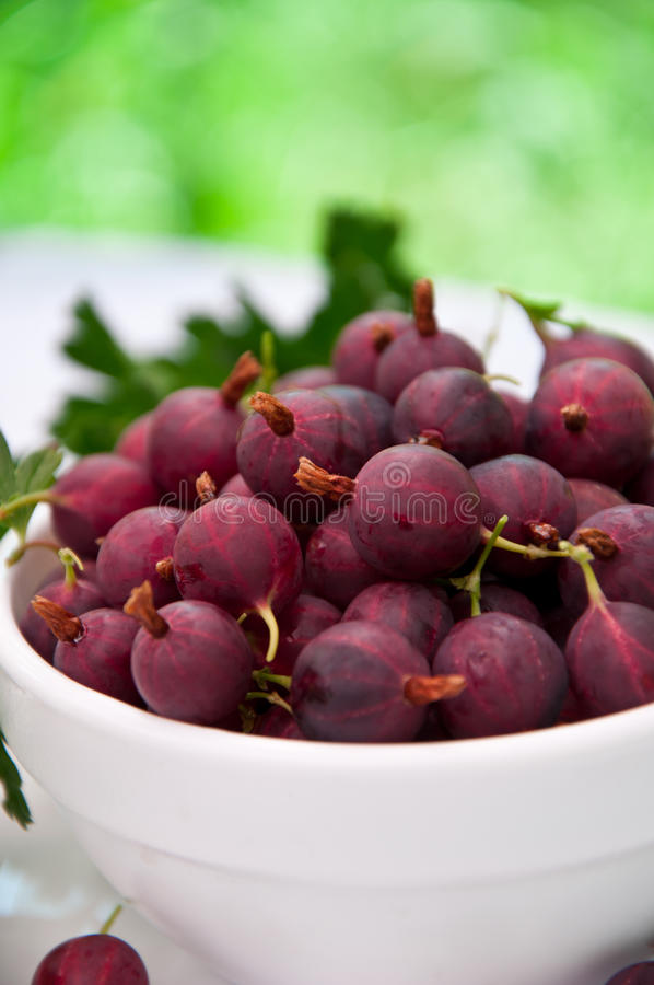 Download Gooseberry Royalty Free Stock Photos - Image: 25455318
