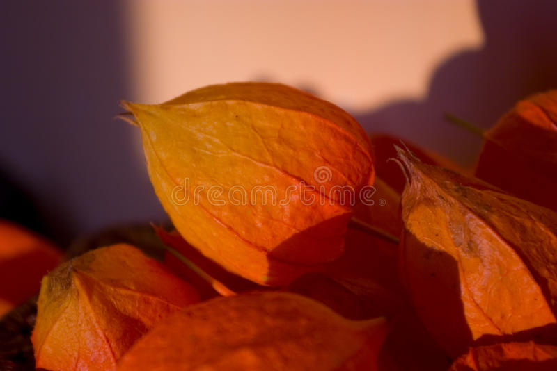 gooseberry fotografia de stock royalty free