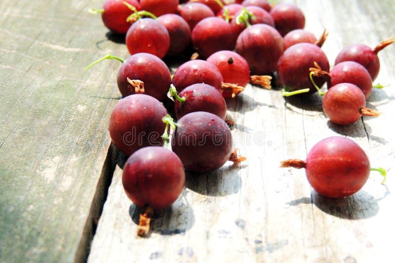 gooseberry imagens de stock royalty free