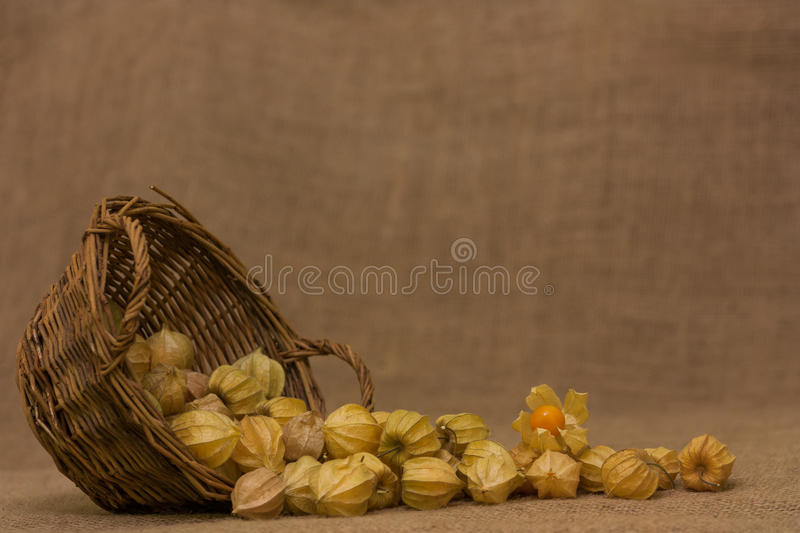 gooseberry fotos de stock royalty free