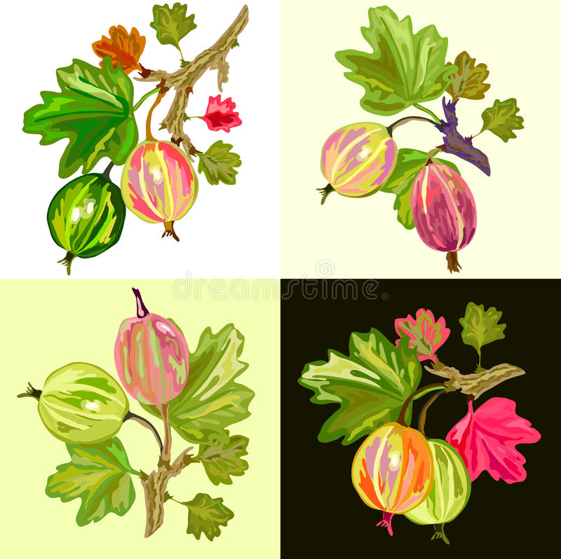 gooseberry images stock