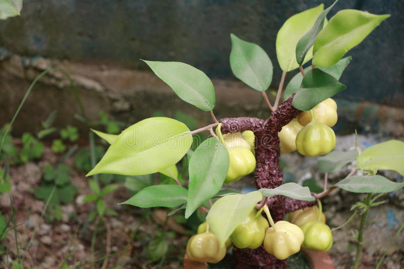 gooseberry immagine stock