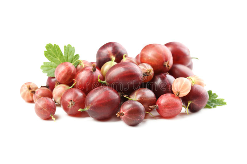 gooseberry foto de stock royalty free