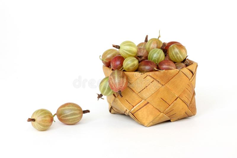 Gooseberry in a basket of birch bark royalty free stock photography
