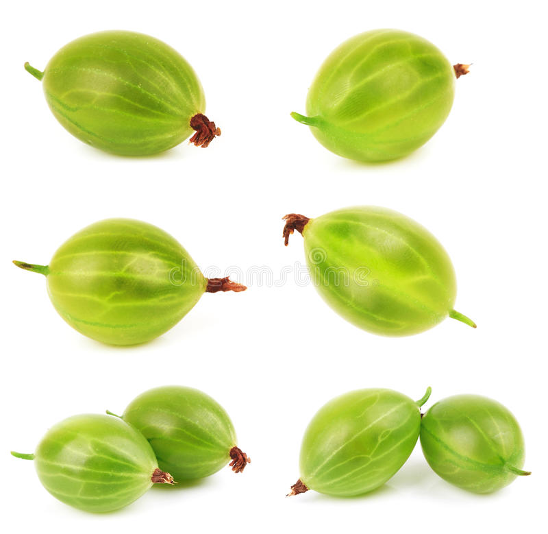 Gooseberry. Closeup of green gooseberry isolated on white background royalty free stock image