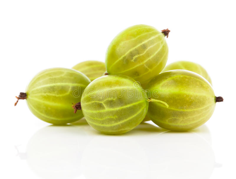 Gooseberry fresco imagem de stock royalty free