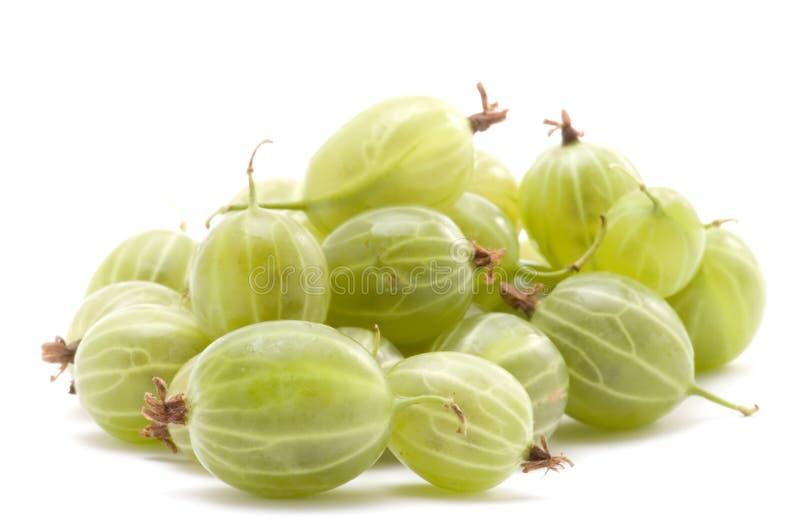 Gooseberry fresco imagem de stock