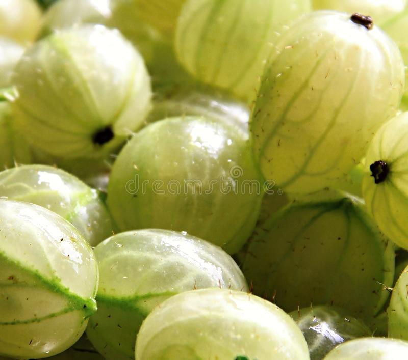 Gooseberry fruit. Image of gooseberry`s in the sun light royalty free stock images
