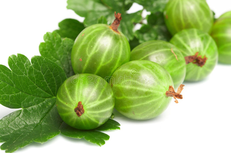 Download Gooseberry,  Among Green Leaves Stock Image - Image: 11535037