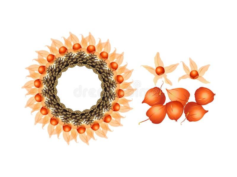 Gooseberry. It is illustration of decorative gooseberry stock photo