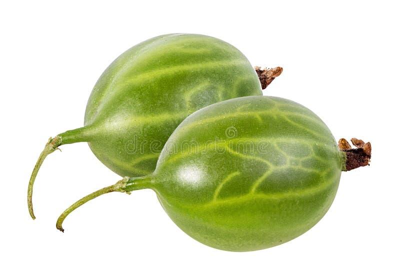 Gooseberry isolado no branco fotos de stock