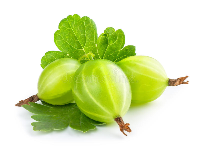 Gooseberry isolado no branco foto de stock royalty free