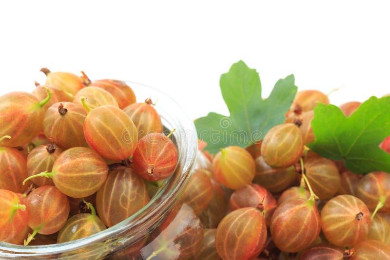 Gooseberry isolated  on white background - Image stock images