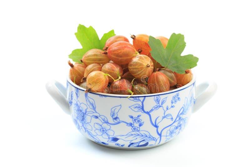 Gooseberry isolated  on white background - Image stock photography