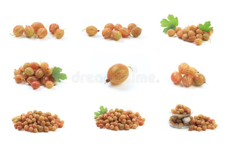 Gooseberry isolated  on white background. Image royalty free stock image