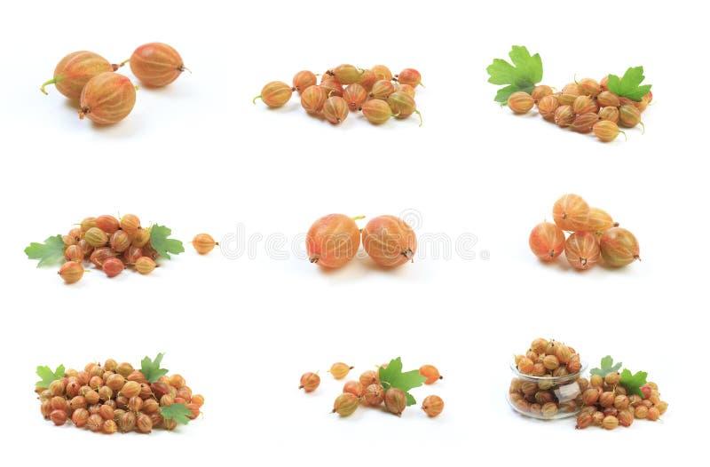 Gooseberry isolated  on white background. Image stock photo