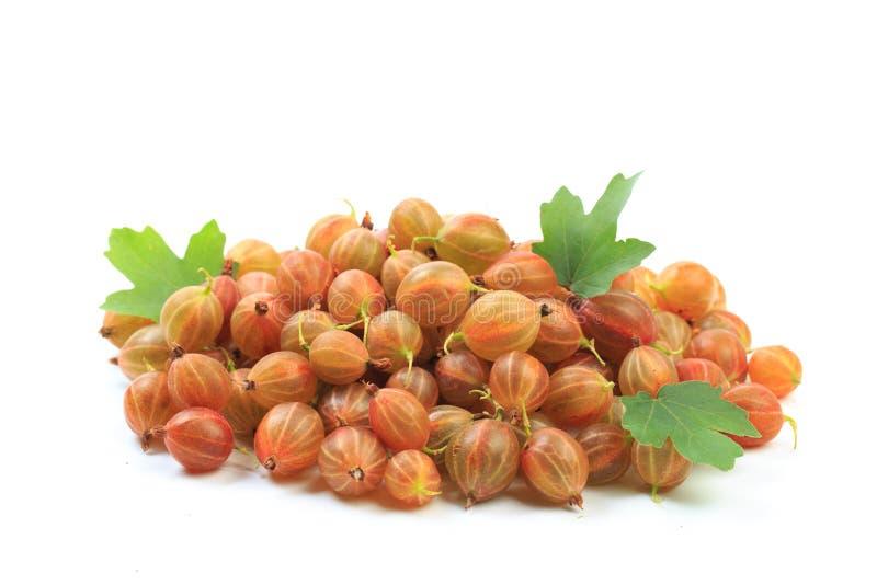 Gooseberry isolated  on white background - Image royalty free stock photo