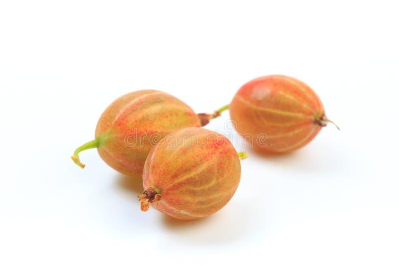 Gooseberry isolated  on white background - Image royalty free stock photos
