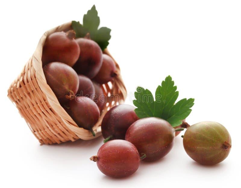 Gooseberry maduro fresco fotos de stock royalty free