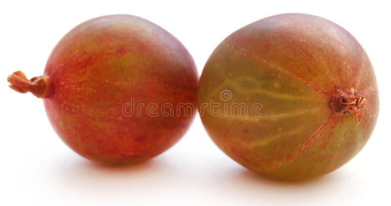 Gooseberry maduro fresco imagens de stock