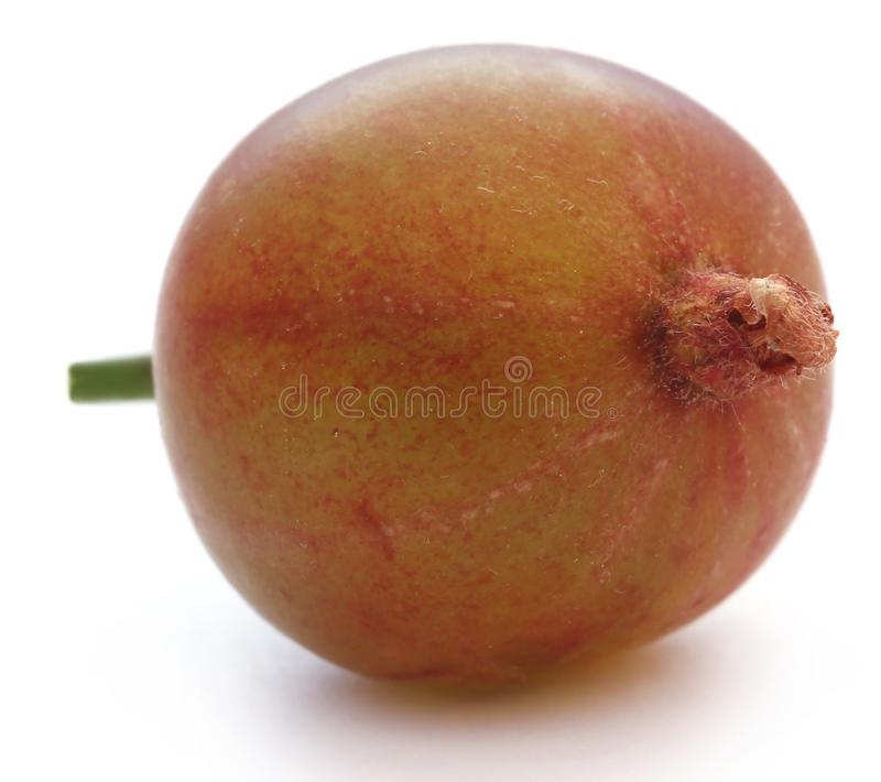 Gooseberry maduro fresco foto de stock