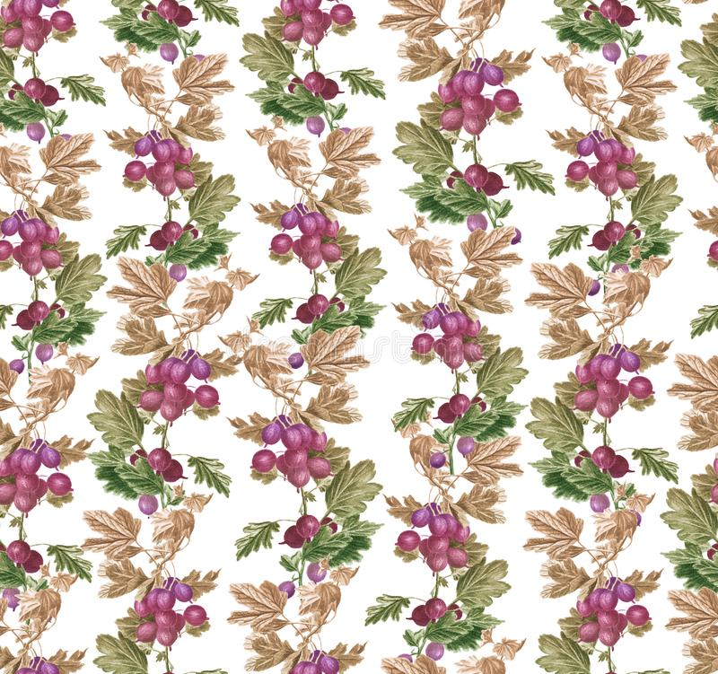 Beautiful seamless pattern with Gooseberry ornament. vector illustration