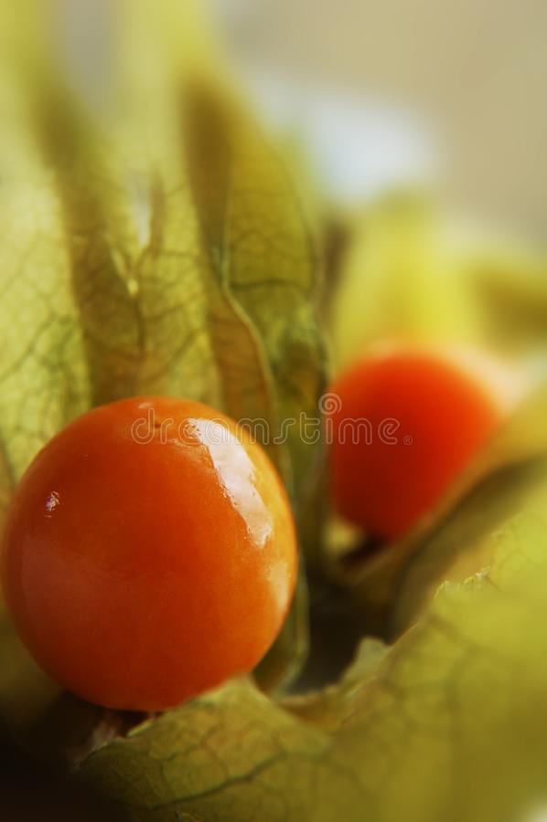 Download Gooseberry (Physalis) stock image. Image of diet, lanterns - 2456107